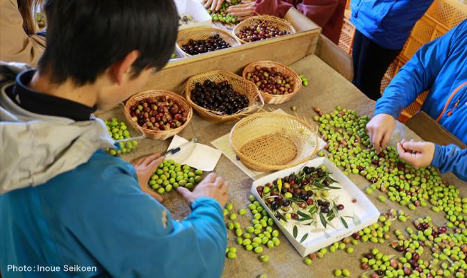 japanese olive oil