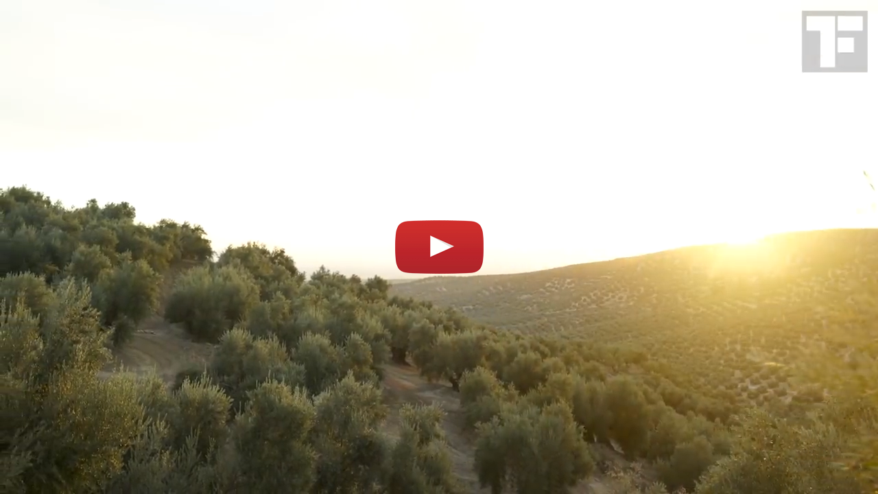 Segment 4: Cultivation of Olive Trees and Sustainability (6 minutes)